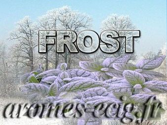 Arome Frost Tino D'Milano
